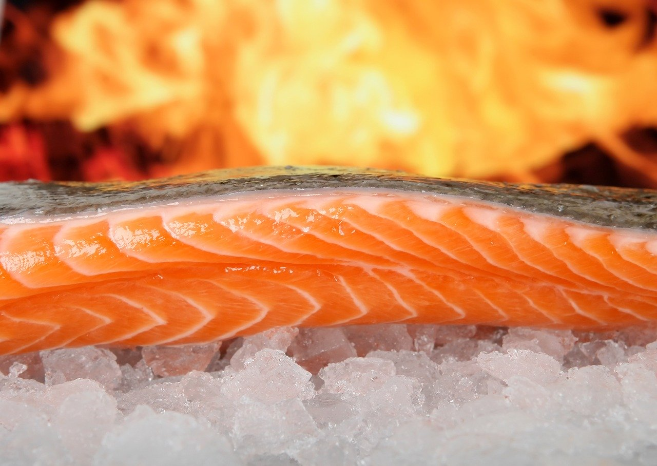 salmon, fish, food